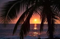 Hawaiian sunset from under a palm
