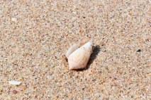 shells, shells, many shells...